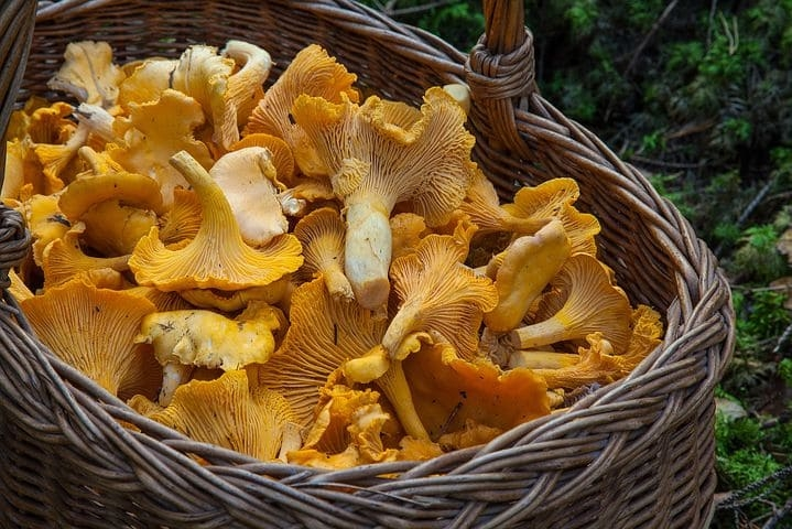 fungus-1194380__480